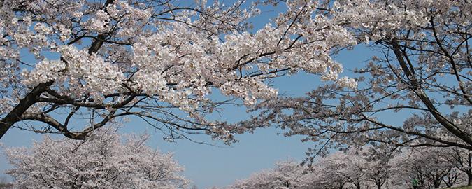 さくら市・氏家ゆうゆうパーク桜
